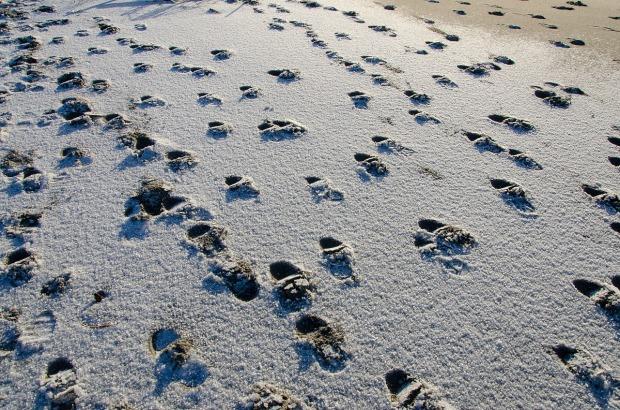 Spuren im Sand2.jpg